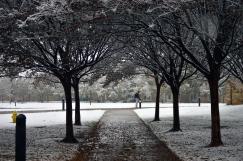 Snow_TU_Pathway2